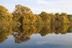 Réflexion des arbres jaunes dans l'eau Image stock
