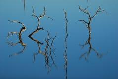 Réflexion des arbres morts Photographie stock libre de droits