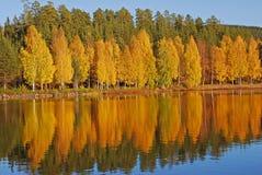 Réflexion des arbres sur le lac Image stock