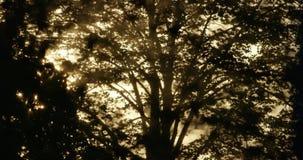 Réflexion des branches clips vidéos