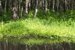 Réflexion des buissons dans l'eau et les arbres en gros plan Photos libres de droits