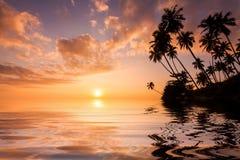 Réflexion des paumes au coucher du soleil sur une île tropicale Photographie stock libre de droits