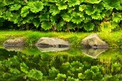 Réflexion des usines et des pierres de jardin dans l'eau Images stock