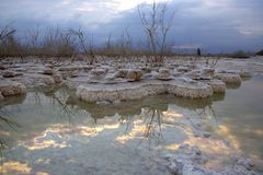 Réflexion du ciel, des nuages et des arbres dans l'eau de la mer morte entre les formations de sel au lever de soleil photographie stock libre de droits