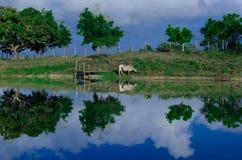 réflexion du paysage dans la lagune dans le sertão du nord-est Photographie stock libre de droits