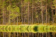 Réflexion ensoleillée sereine de forêt de matin Photo libre de droits