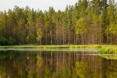 Réflexion ensoleillée sereine de forêt de matin Image libre de droits