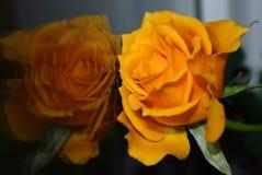 Réflexion jaune de fleur Image libre de droits