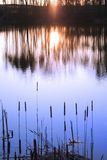 Réflexion réglée de Sun Image libre de droits