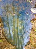 Réflexion sur l'eau photos stock