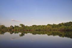 Réflexion sur la jungle Images libres de droits