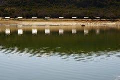 Réflexion sur le lac Photos libres de droits