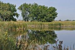 Réflexion sur un étang Photo stock