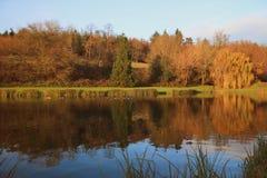 Réflexions automnales de l'eau d'arbre dans le lac anglais Photographie stock