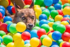 Réflexions colorées aux yeux d'un chien photo libre de droits