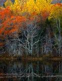 Réflexions colorées de l'eau de feuillage d'automne Photographie stock