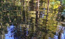 Réflexions d'arbre Photographie stock libre de droits