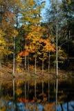 Réflexions d'arbre Photo stock