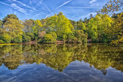 Réflexions d'arbre Photos libres de droits