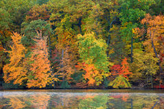 Réflexions d'arbre d'automne Image stock