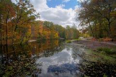 Réflexions d'arbre d'automne Photographie stock libre de droits
