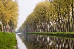 Réflexions d'arbre de canal de Bruges Images stock