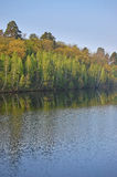 Réflexions d'arbres Photos stock