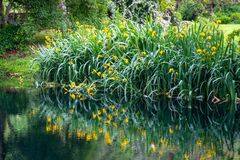 Réflexions d'herbe et de fleur sur l'eau sur le fond horizontal d'étang impressionniste de jardin de rivage de rivière images libres de droits
