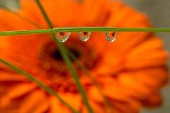 Réflexions dans des baisses de l'eau Images libres de droits