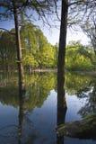 Réflexions dans l'eau Photo libre de droits
