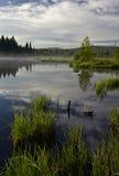 Réflexions dans l'eau du marais images stock
