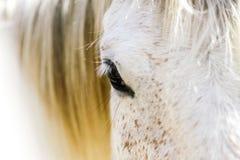 Réflexions dans l'oeil d'un cheval photographie stock libre de droits