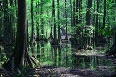 Réflexions dans le marais photo stock