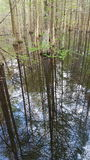 Réflexions dans le marais Photo libre de droits