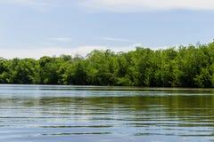 Réflexions dans le marais Images libres de droits