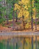 Réflexions de chute dans le lac photo libre de droits