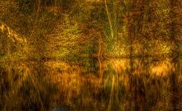 Réflexions de couleurs d'automne photos libres de droits