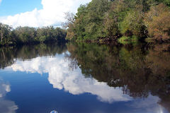 Réflexions de fleuve de Suwannee Photographie stock