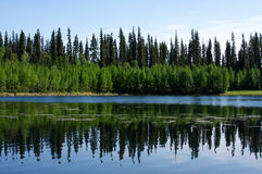 Réflexions de forêt Images stock