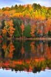 réflexions de forêt d'automne photographie stock libre de droits