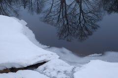Réflexions de glace et d'arbre de jante Photo libre de droits