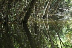 Réflexions de l'eau Photographie stock libre de droits