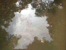 Réflexions de l'eau d'arbre Images libres de droits