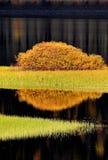Réflexions de l'eau en automne photos stock