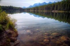 Réflexions de lac herbert Image stock