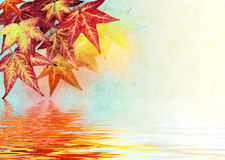 Réflexions de lame d'automne Photo libre de droits