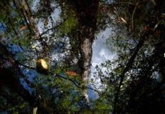 Réflexions de marais Image stock