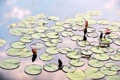 Réflexions de nénuphars et de nuages dans l'étang Photographie stock
