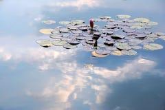 Réflexions de nénuphars et de nuages dans l'étang Image libre de droits