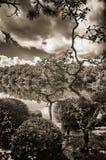 Réflexions de nuage Photos libres de droits